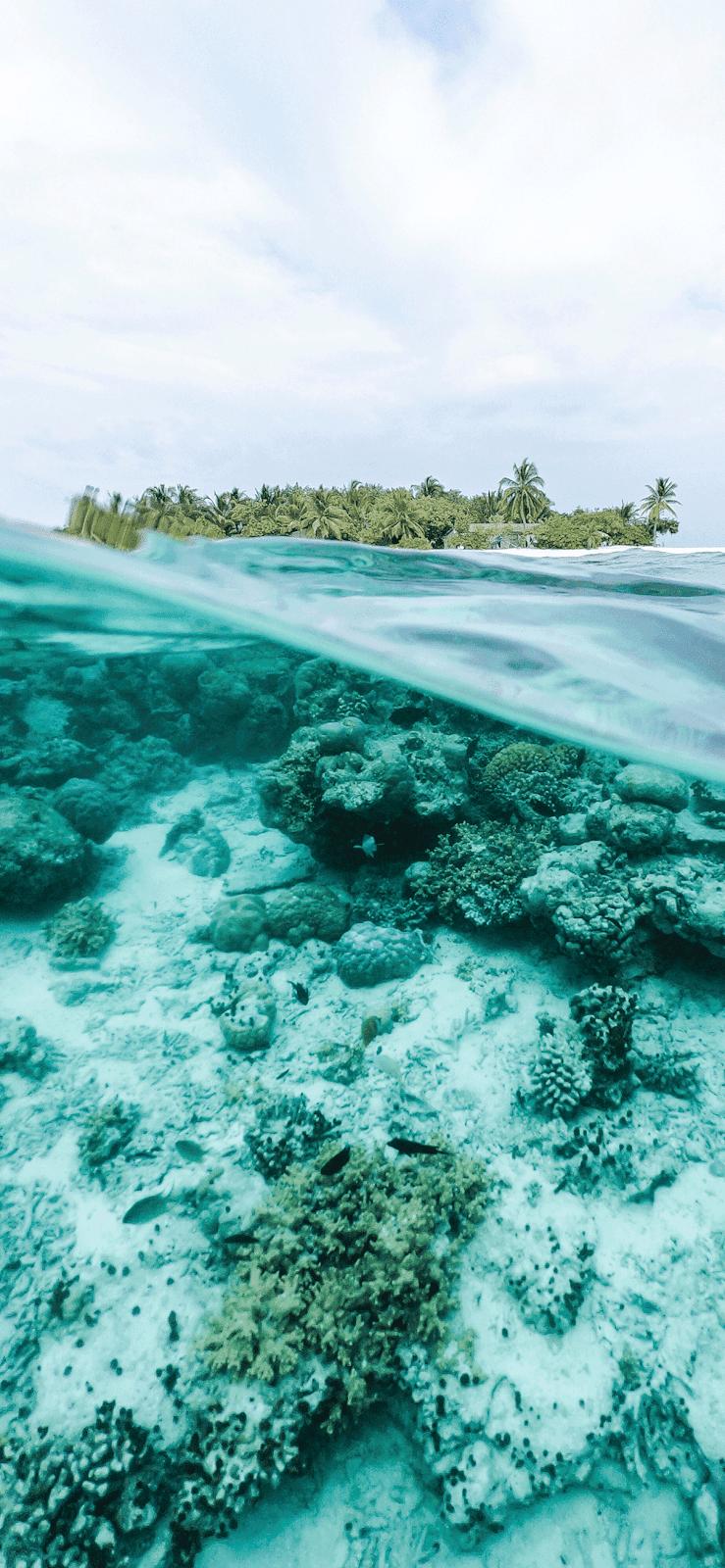 Underwater Ocean Wallpaper Iphone 739x1600 Wallpaper Teahub Io