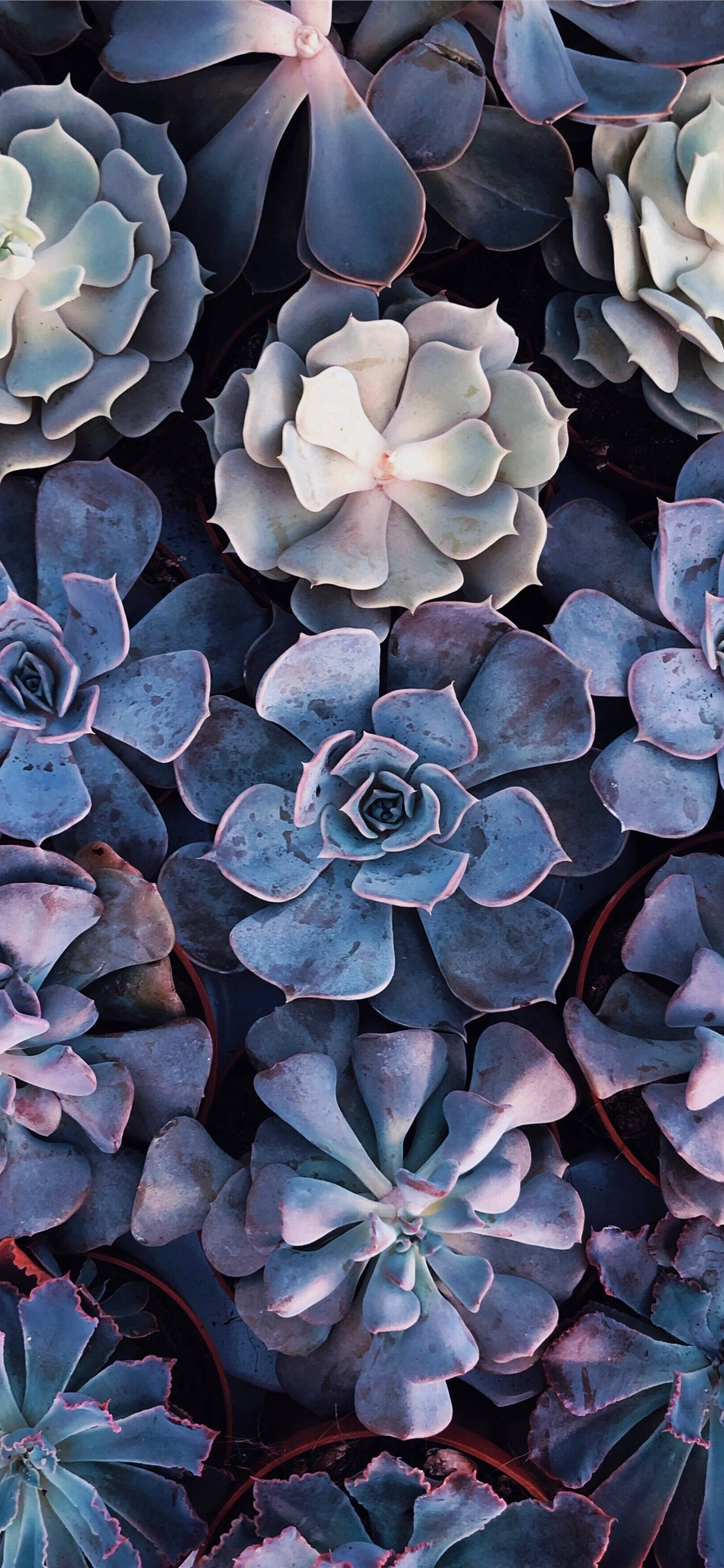 Iphone 11 Succulent Background 1125x2436 Wallpaper Teahub Io
