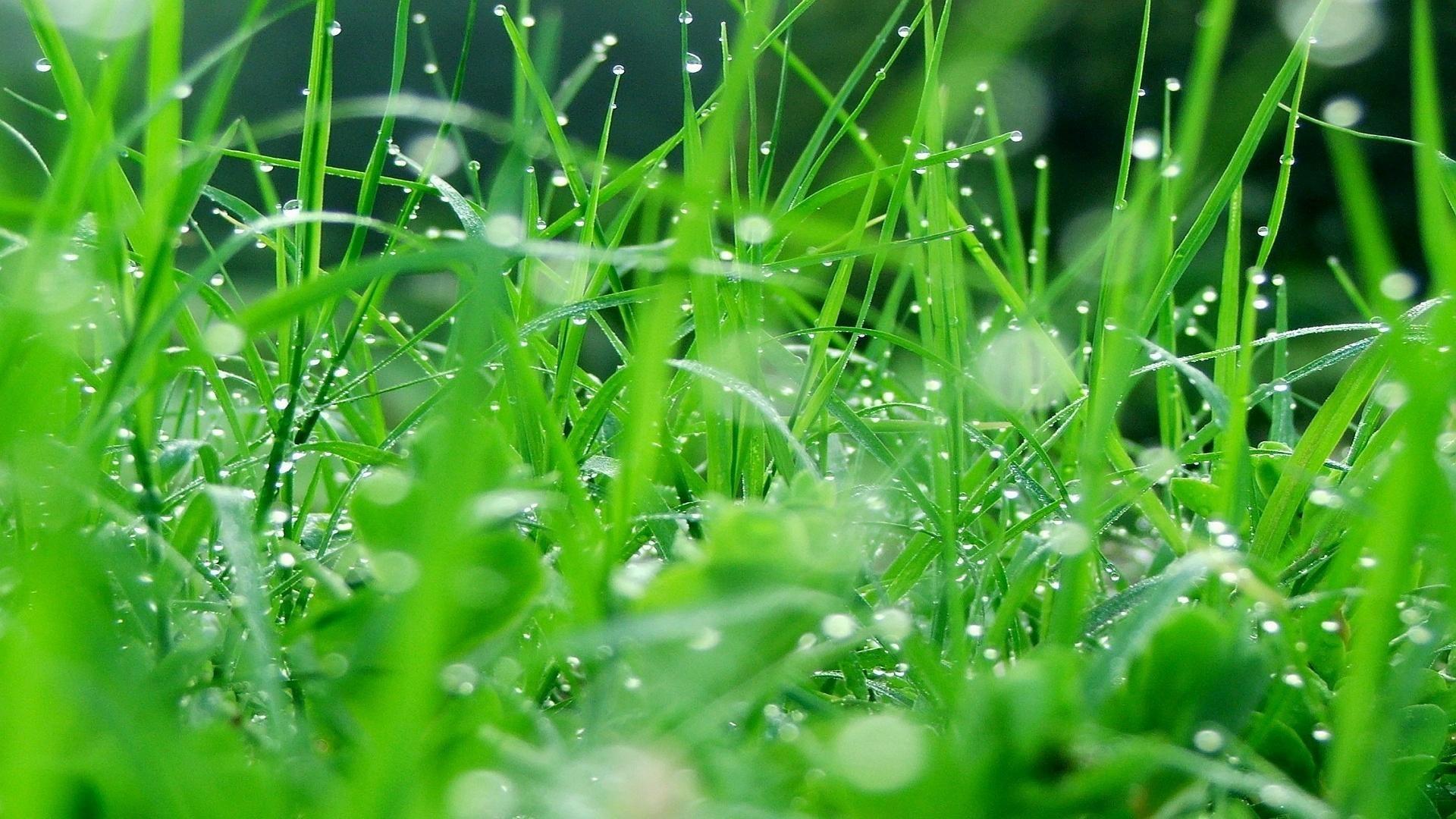 1920x1080 lush grass wallpapers hd data id 231429 full hd green grass hd 1920x1080 wallpaper teahub io teahub io