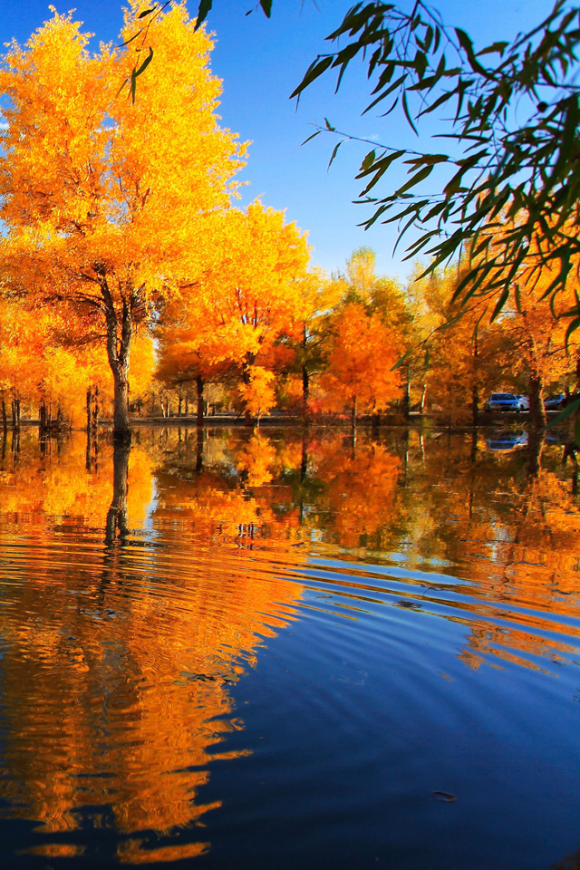 Fall Reflection Wallpaper Fall Trees Wallpaper Iphone 640x960 Wallpaper Teahub Io