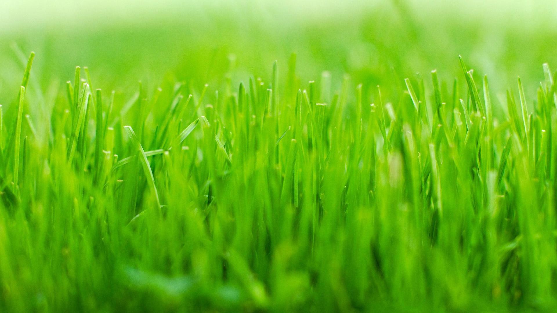 20+ Green Grass Wallpaper Hd