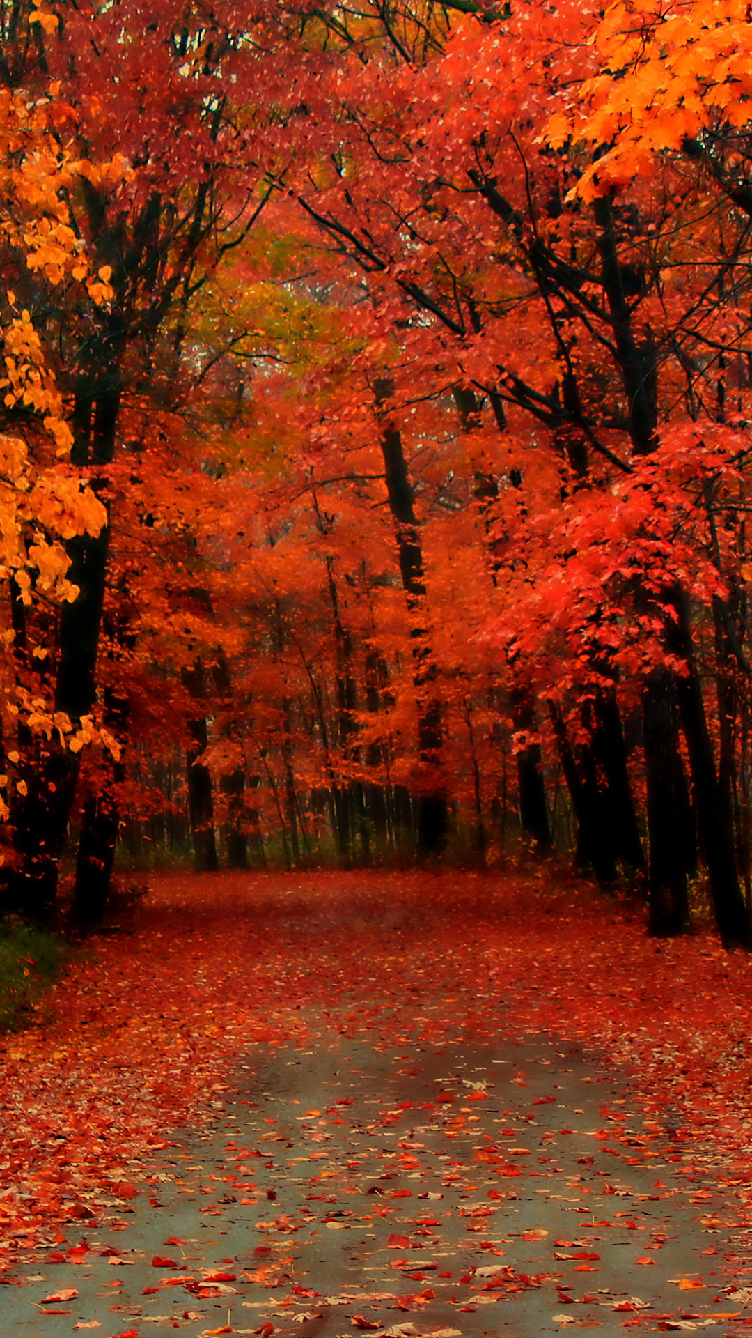 Red Autumn Wallpaper - Aesthetic Autumn Background Iphone - HD Wallpaper