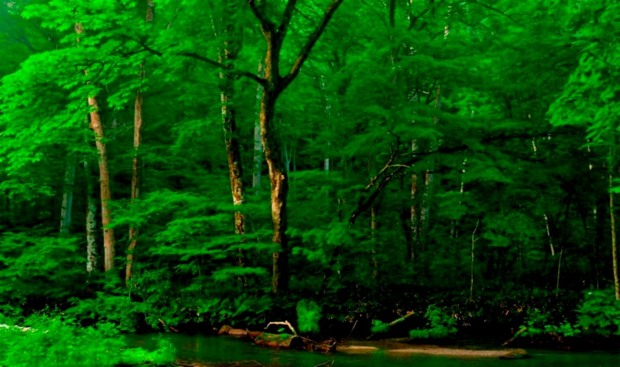 Forests Nature Forest Green Trees Wallpaper Hd For Green Tree Wallpaper Hd 1080p 1216x720 Wallpaper Teahub Io
