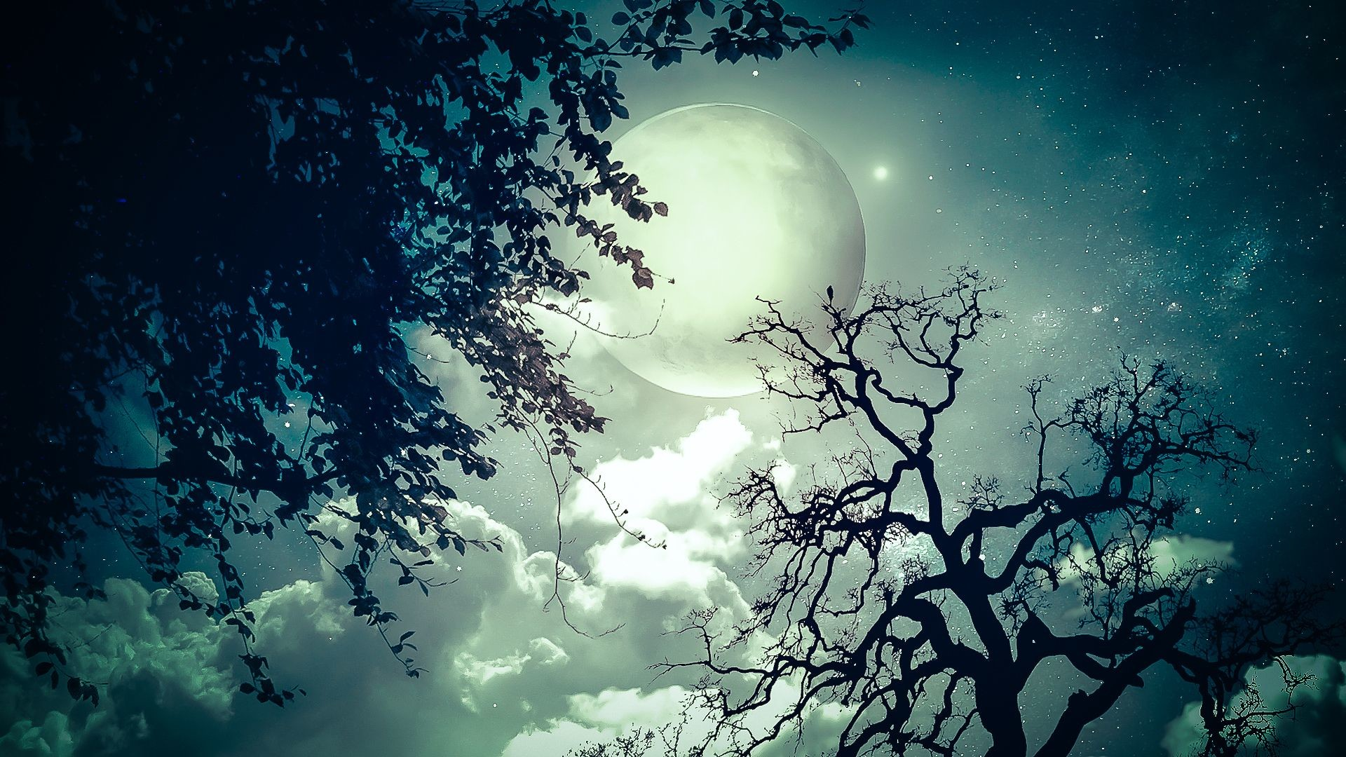 Hd Wallpapers Widescreen 1080p 3d - Trees And The Moon - HD Wallpaper