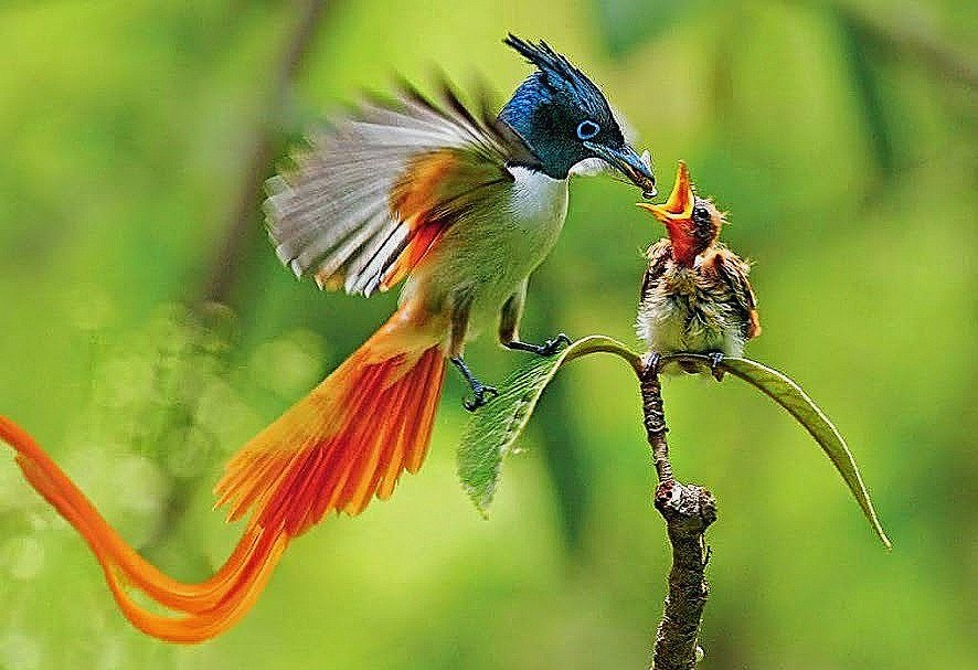 Hd Wallpapers For Android Mobile Free Download Baby Bird Of Paradise 886x607 Wallpaper Teahub Io