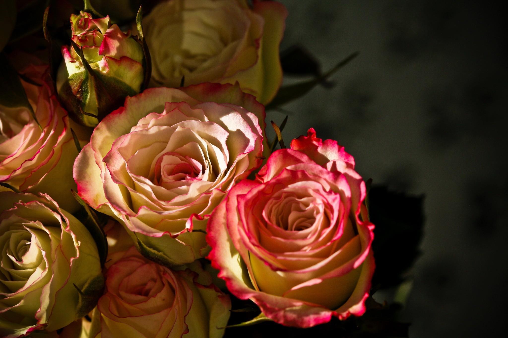 Flower Wallpaper Tumblr, Natural, Flowers, Closeup, - 1080p Natural Flower - HD Wallpaper