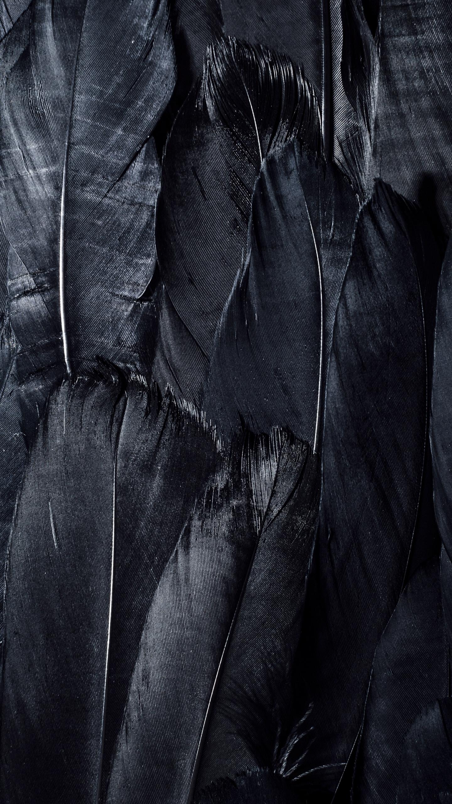 Wallpaper Feathers Black Dark Background Black Hd 1440x2560 Wallpaper Teahub Io