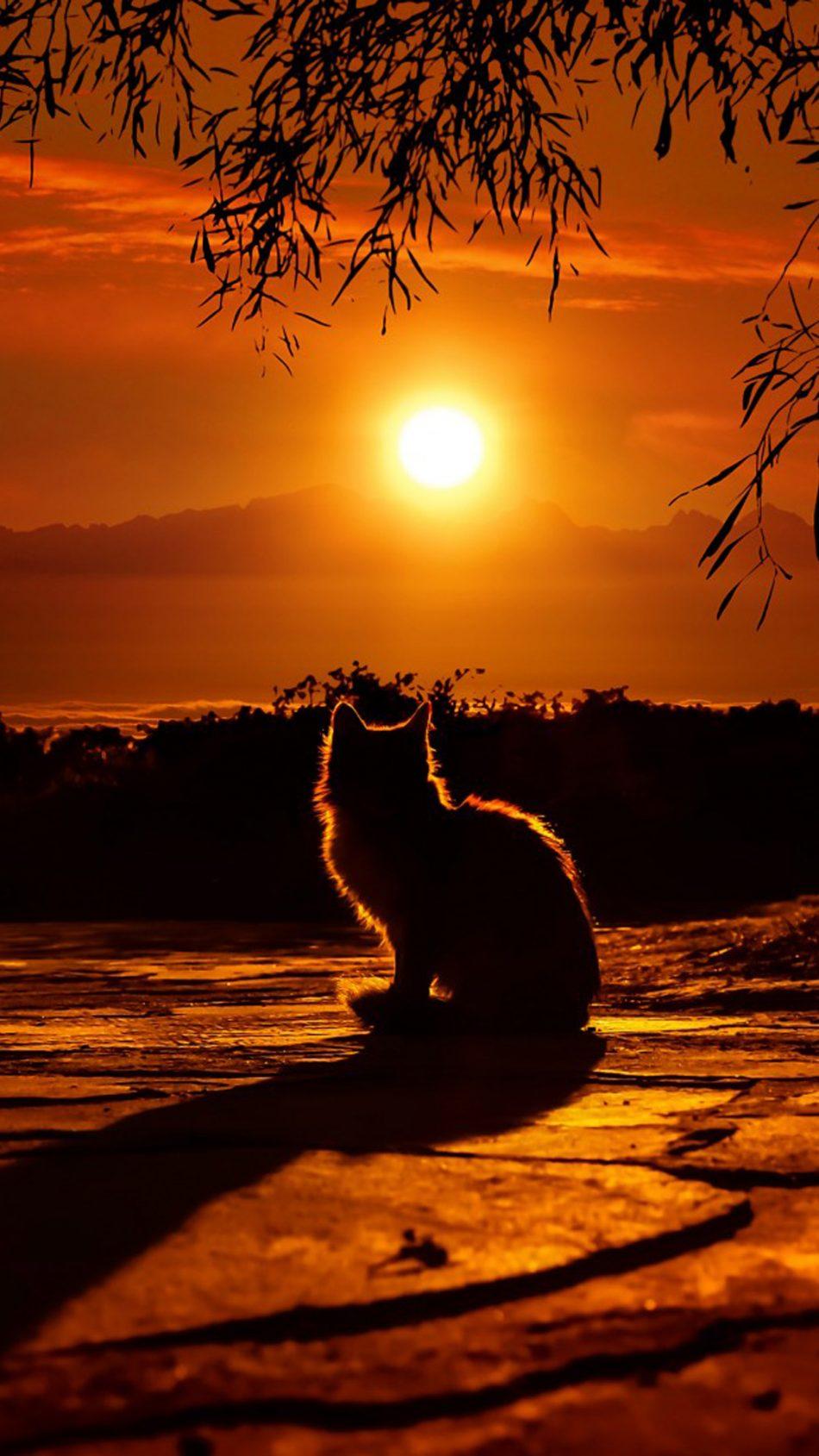 Cat Enjoying Sunset Hd Mobile Wallpaper - Sunset Wallpaper Iphone 4k - HD Wallpaper