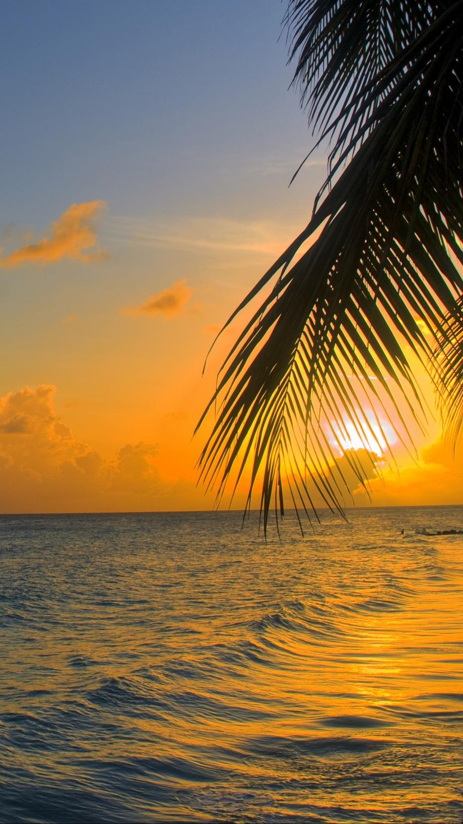 Wallpaper Ocean, Sunset, Palm, Beach, Barbados - Ocean Sunset Background Iphone - HD Wallpaper
