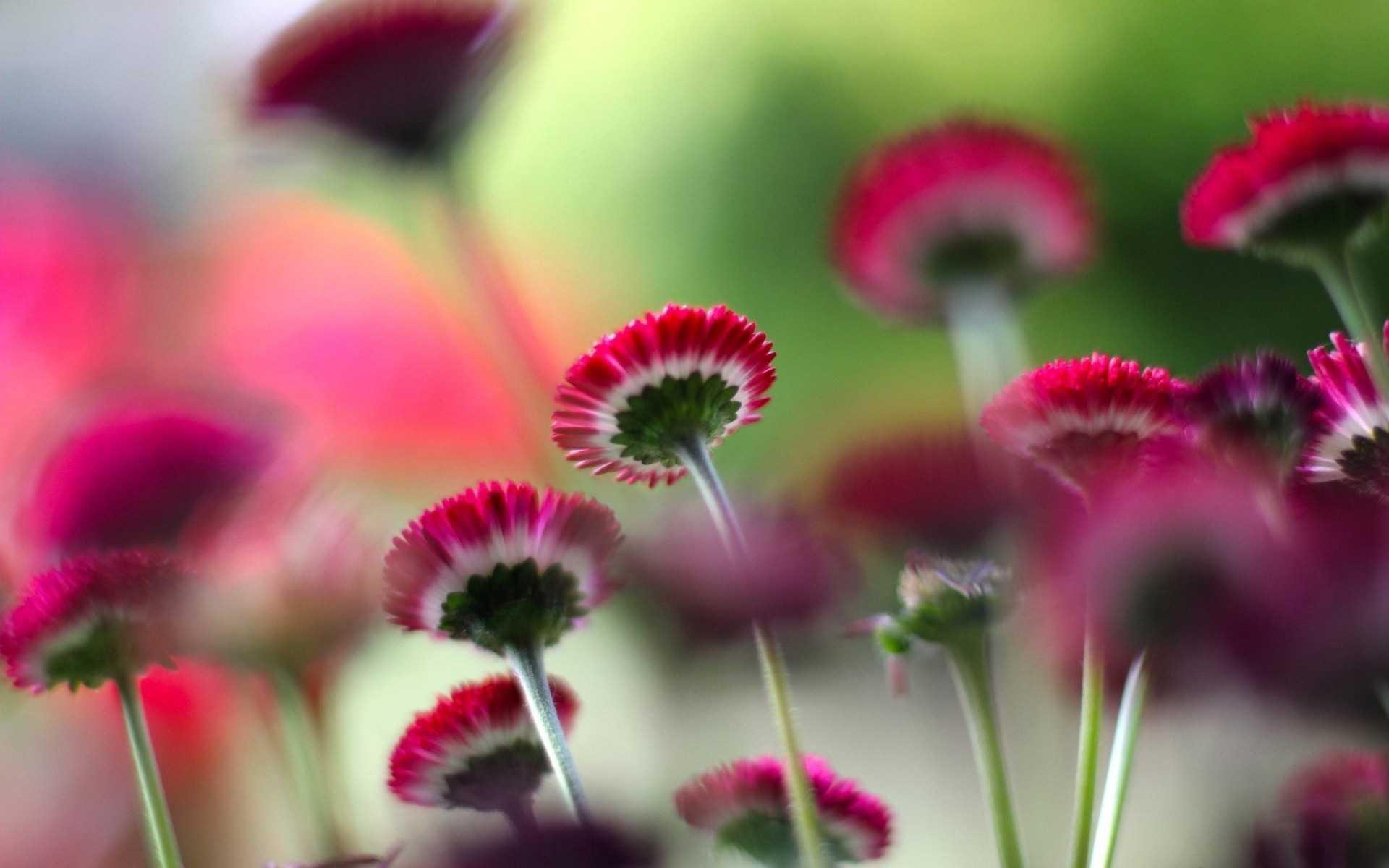 Most Beautiful Flowers Wallpapers Desktop - HD Wallpaper