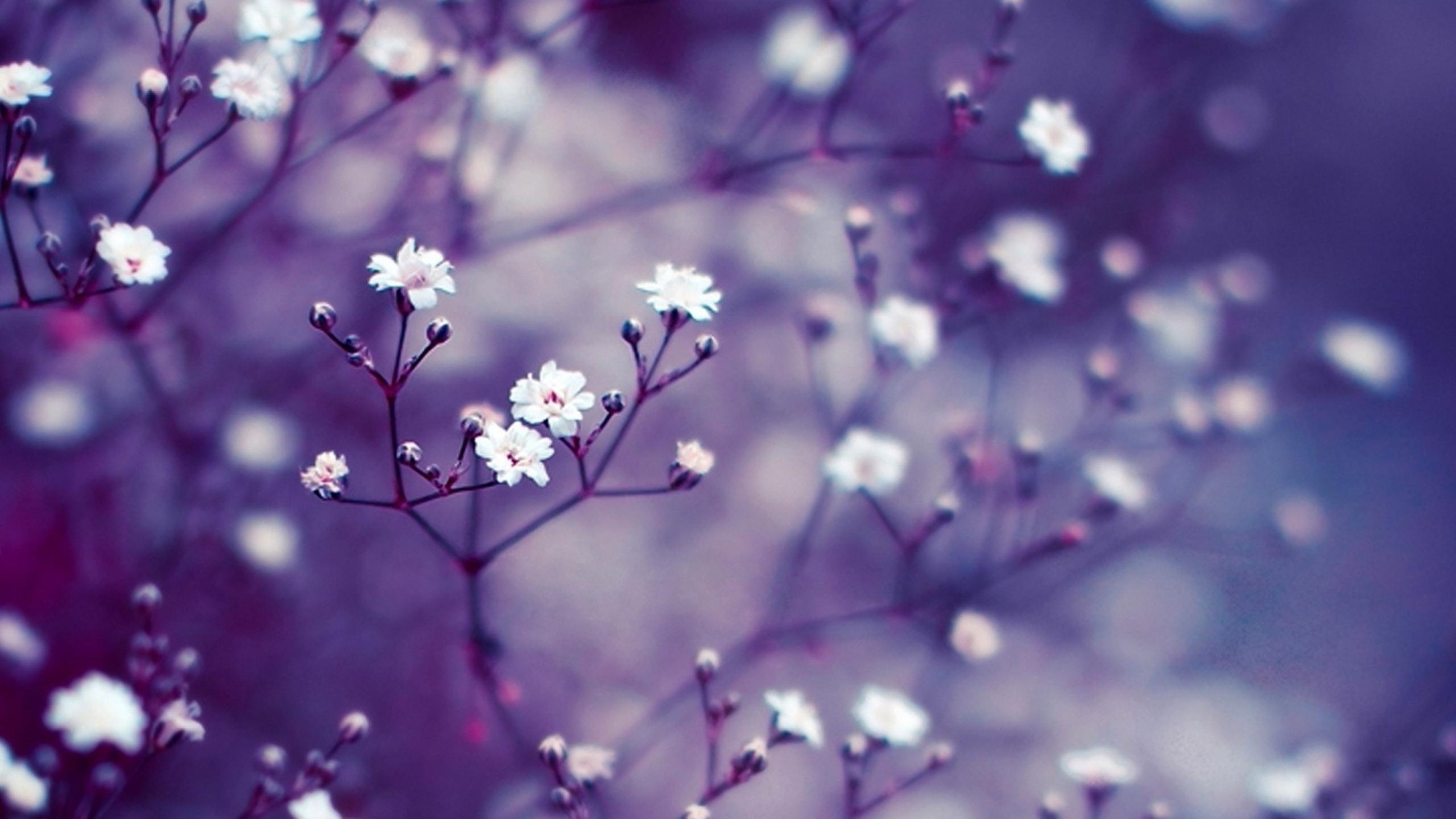 77 771994 high resolution wallpaper nature flowers