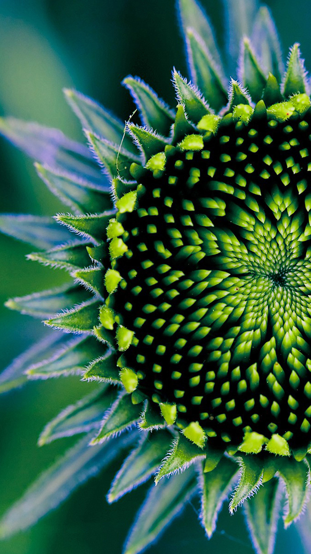Very Good Plant Iphone 6 Plus Wallpaper   Data Src - 10 Most Amazing Symmetry In Nature - HD Wallpaper