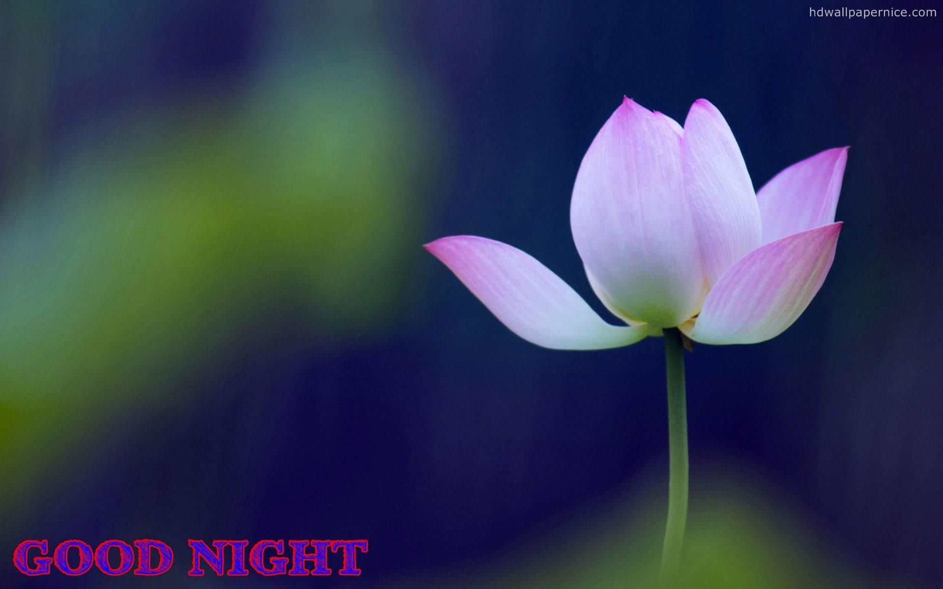 Good Night Flower Wallpapers Free Good Night Wallpaper New Wallpaper Good Night Hd 1920x1200 Wallpaper Teahub Io