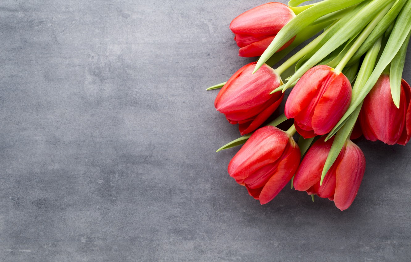 Photo Wallpaper Flowers Bouquet Tulips Red Red Tulip 1332x850 Wallpaper Teahub Io