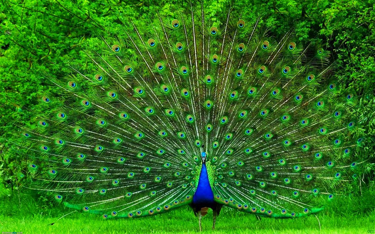 Top 10 Most Beautiful Birds In The World - HD Wallpaper