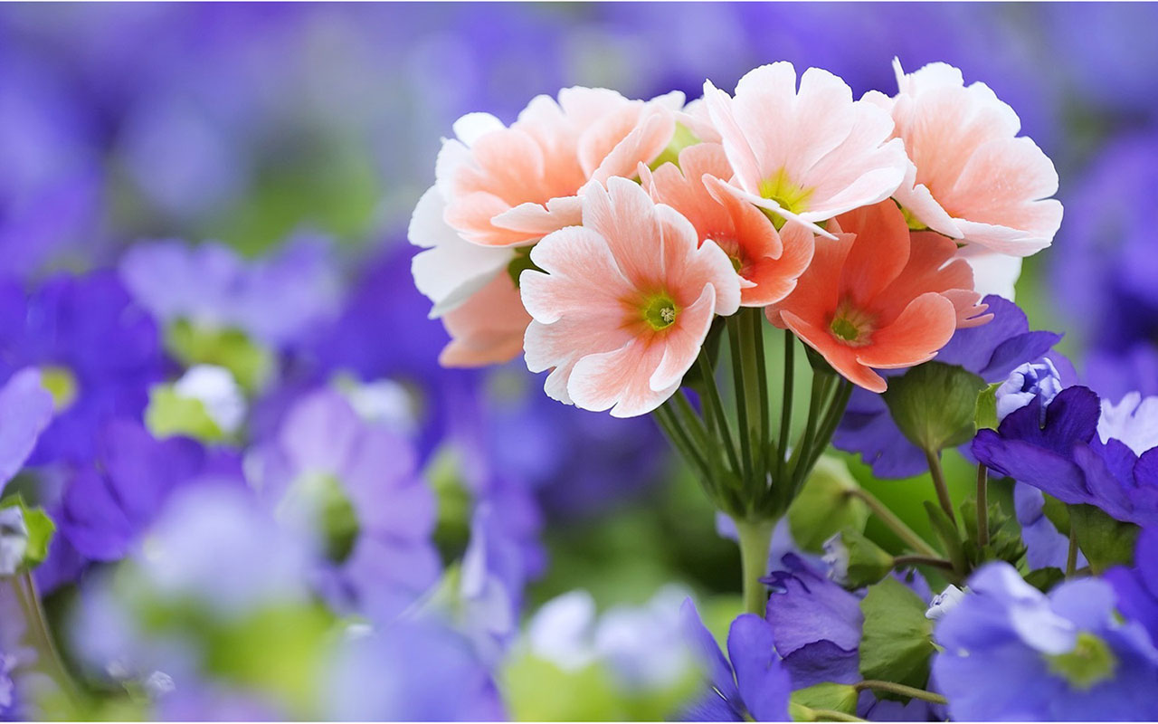 Flower Desktop Wallpaper Hd - New Hd Images Flowers - HD Wallpaper