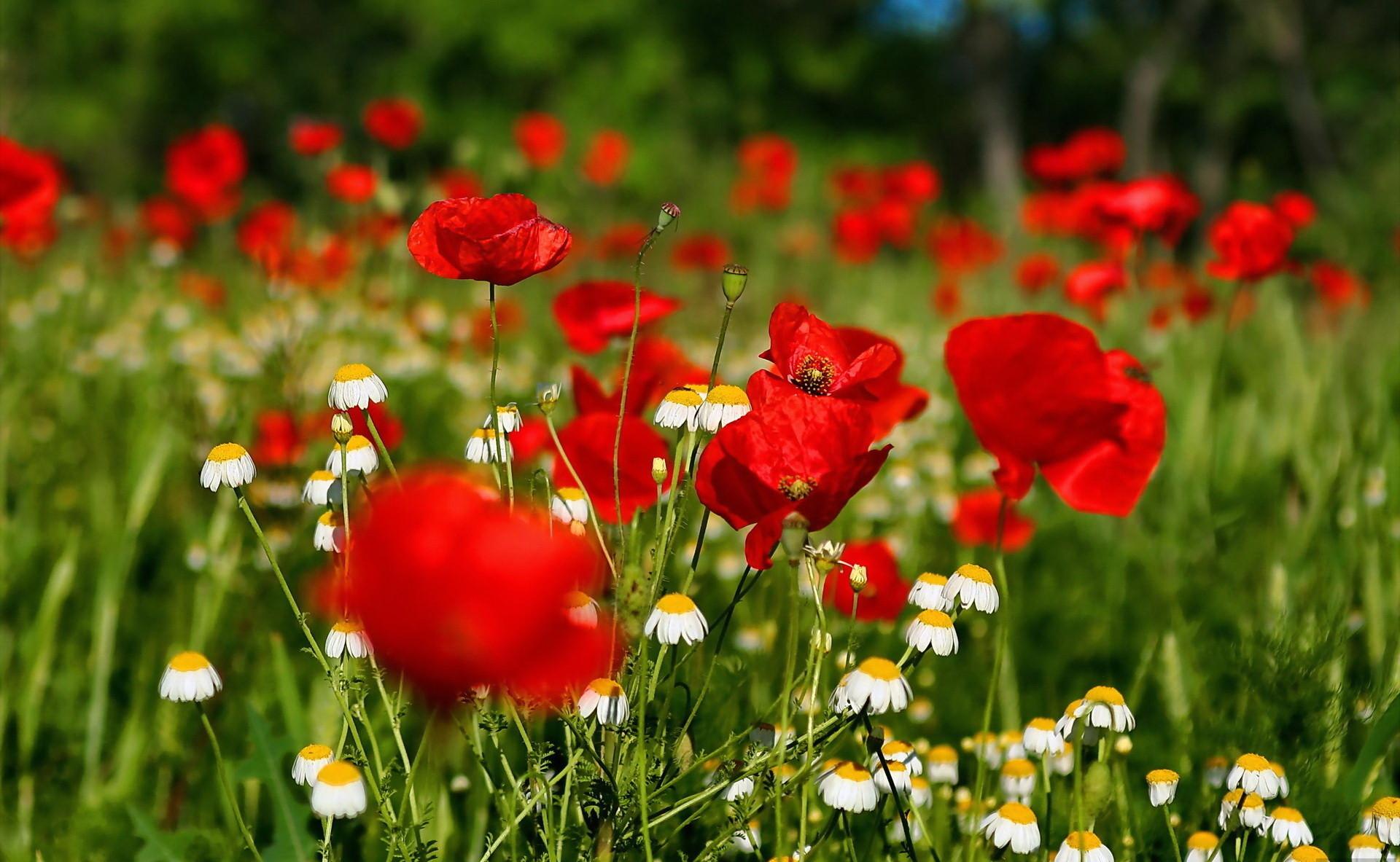 Desktop Flower Backgrounds Group   Data Src Gorgerous - Hd Computer Wallpapers Flowers - HD Wallpaper