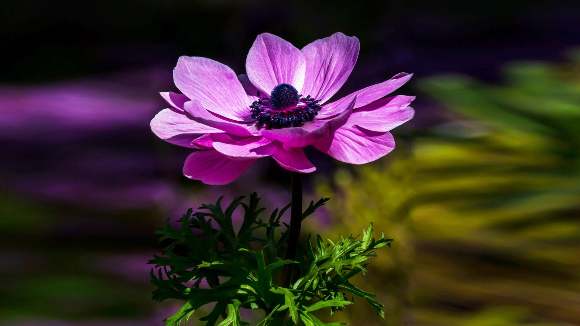 Flower Desktop - HD Wallpaper