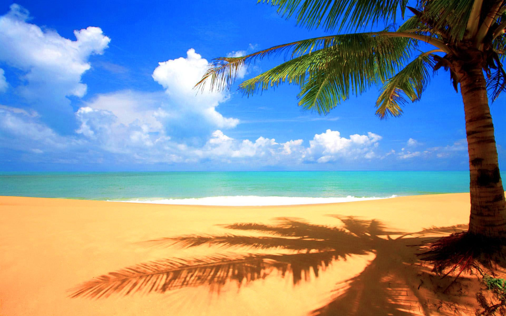 Beach And Palm Trees Background - HD Wallpaper