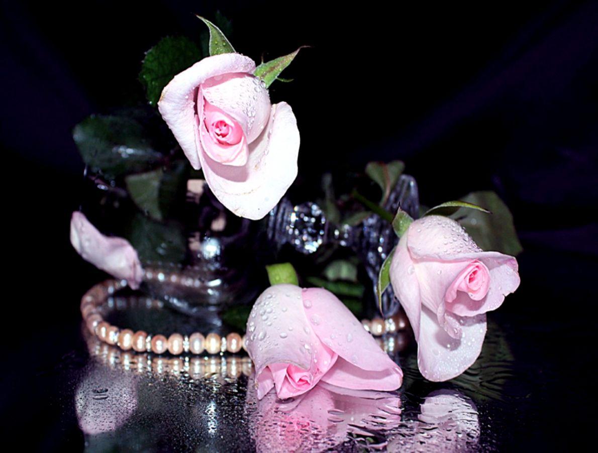 Roses Beautiful Flowers Romantic Rose Reflection Life - Beautiful Romantic Rose Flowers Hd - HD Wallpaper