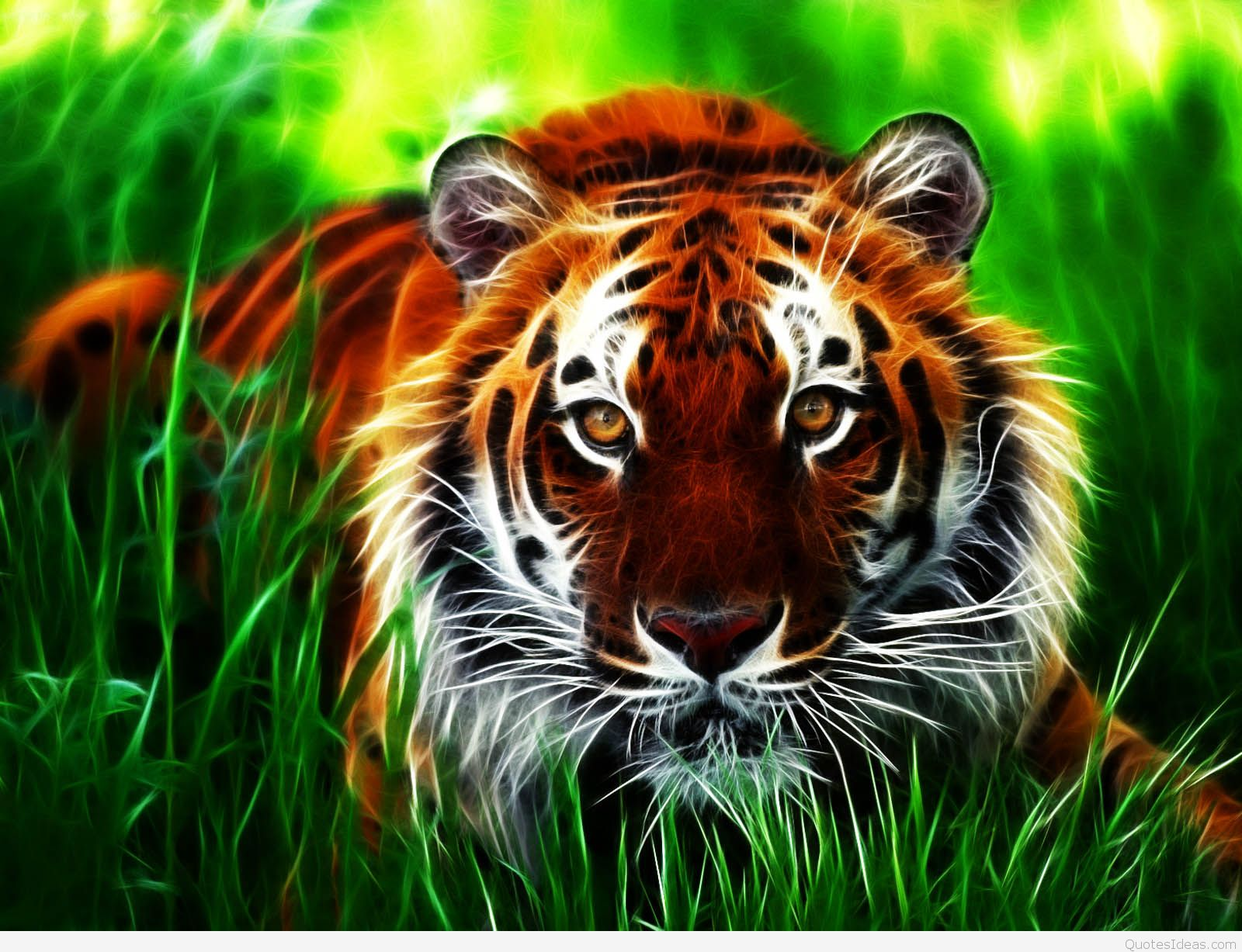 3d Animated Wallpaper For Mobile Hd Tiger 1600x1227 Wallpaper Teahub Io