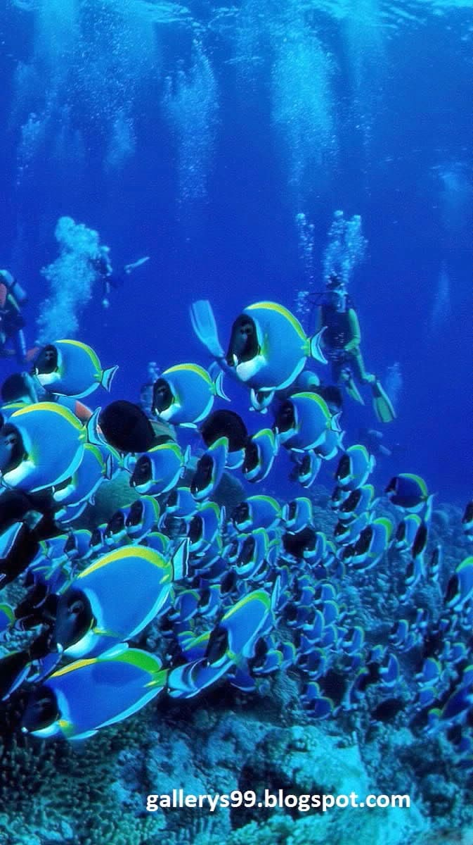 3d Animated Wallpaper For Mobile-740384 - School Of Tropical Fish - HD Wallpaper