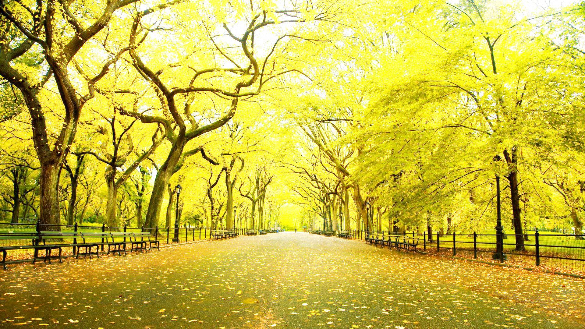 Wallpaper Hd 1080p Free Download - New York Central Park Autumn - HD Wallpaper