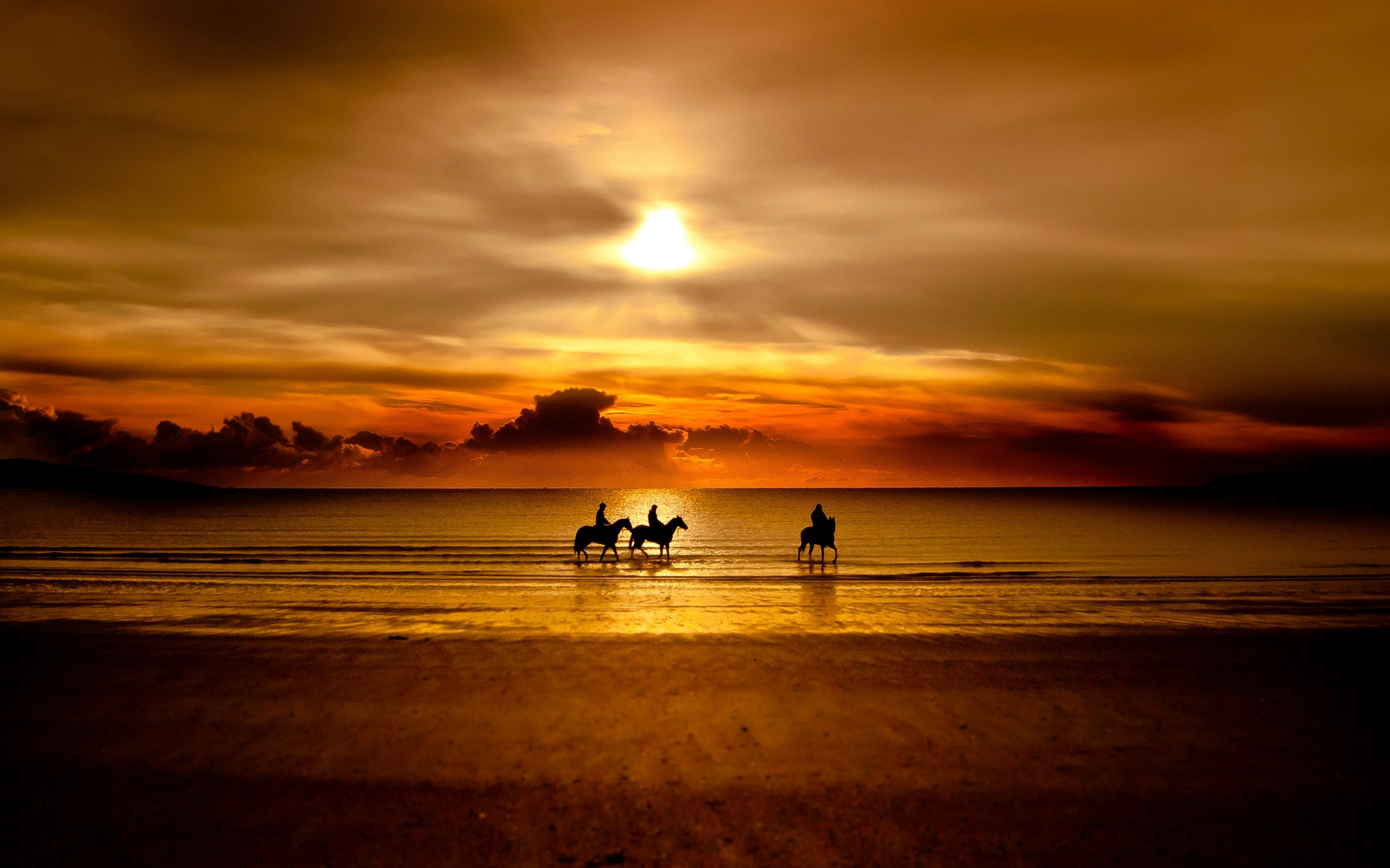 Horse Silhouette Sunset Photography Wallpaper Horse Walking On Beach 2560x1600 Wallpaper Teahub Io