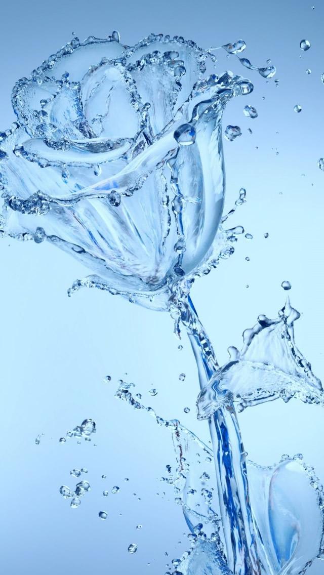 Water Flowers Iphone Wallpaper - Apple Iphone 5 Water - HD Wallpaper