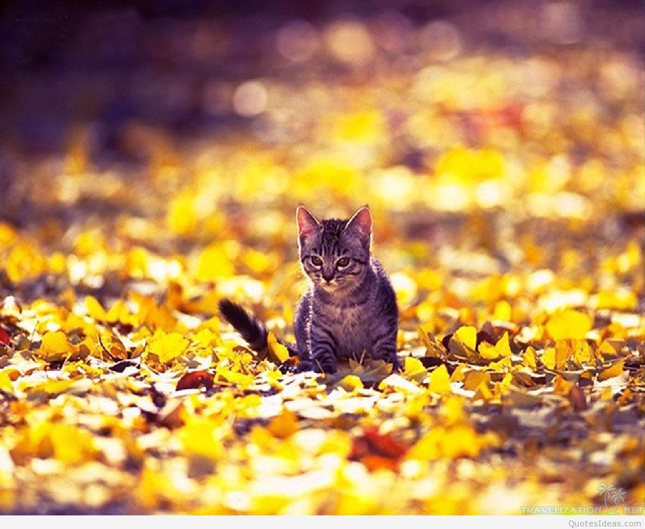 Amazingly Surprising Cats Wallpapers Travelizat Awesome - Cats And Autumn Hd - HD Wallpaper