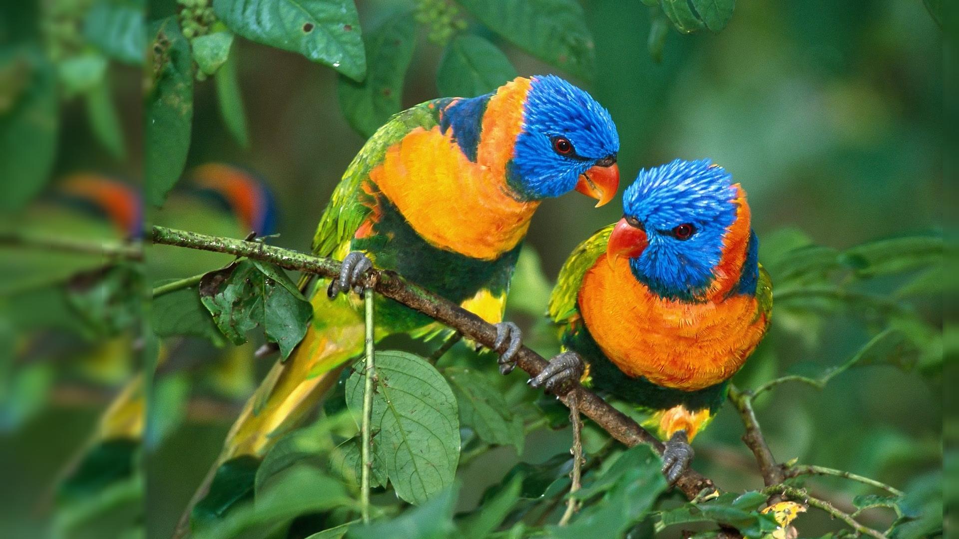 All Bird Wallpaper Download Nature Bird Hd 1920x1080 Wallpaper Teahub Io