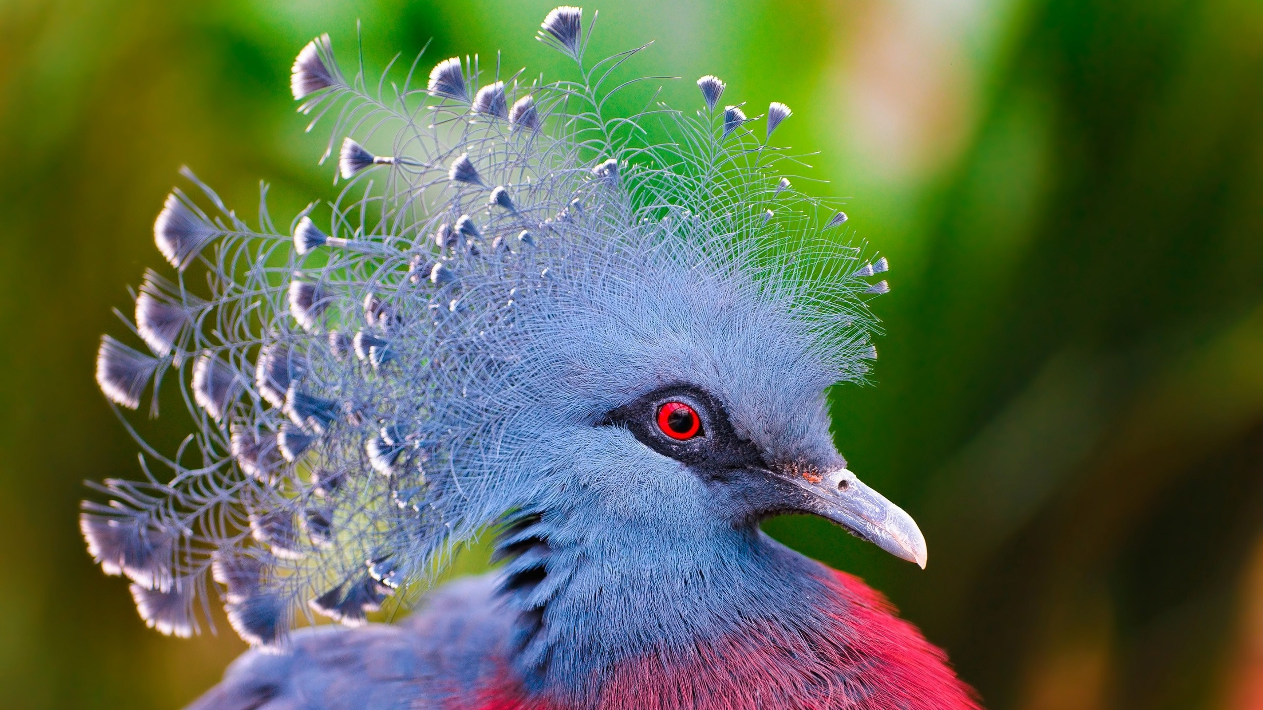 Parrots Paradise Birds Hd K Wallpapers Data Src Widescreen Birds Of Paradise Hd 2560x1440 Wallpaper Teahub Io