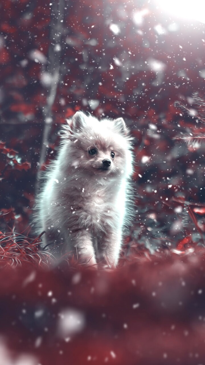 Animals Baby And Baby Dog Image Pomeranian Puppy Wallpaper Iphone 720x1280 Wallpaper Teahub Io