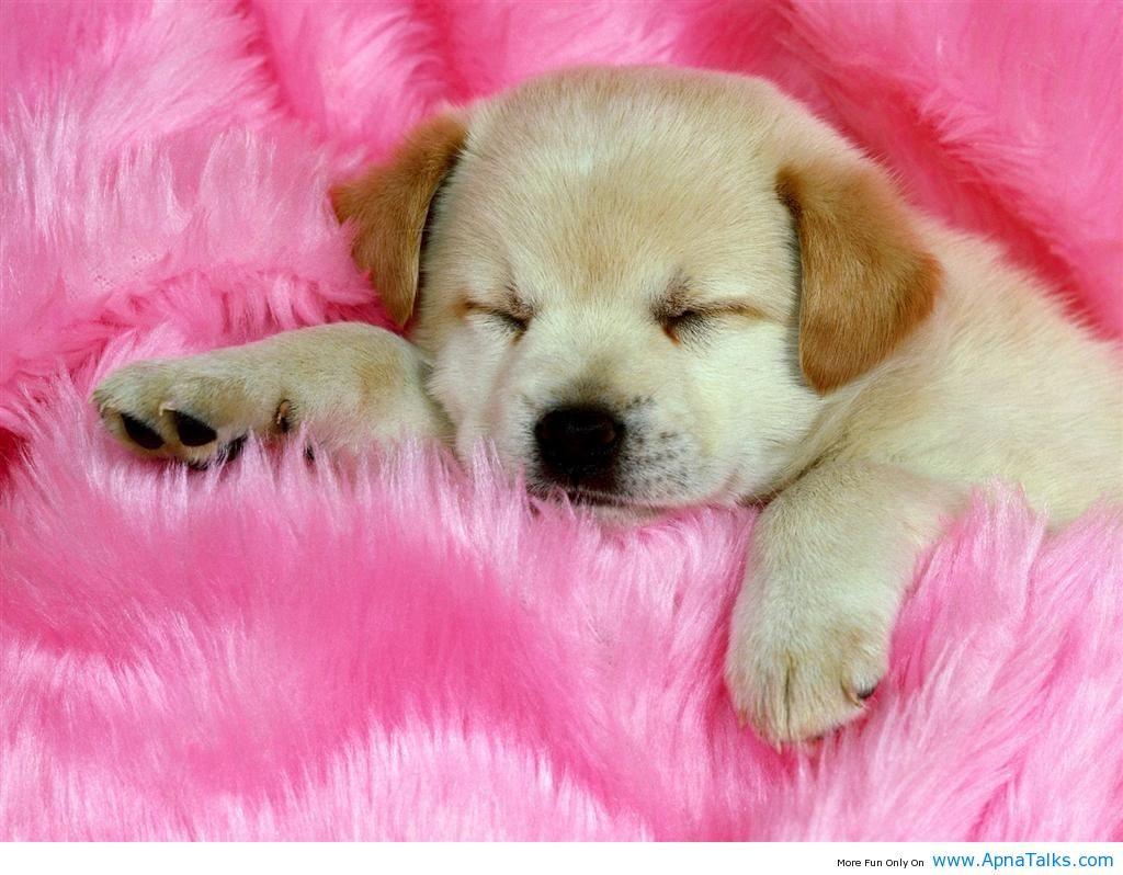 Baby Dog Images Download 1024x798 Wallpaper Teahub Io