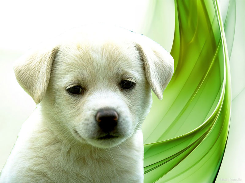 3d Wallpaper Of Dog - 800x600 Wallpaper - teahub.io