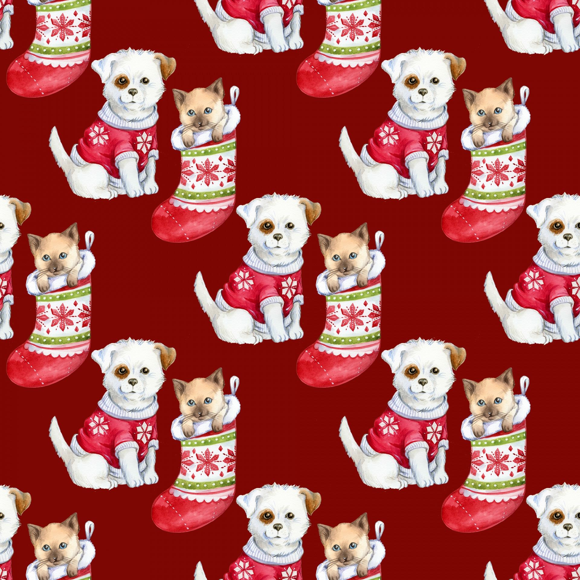 Christmas Puppy Kitten Free Photo Christmas Puppies Cartoon 1920x1920 Wallpaper Teahub Io