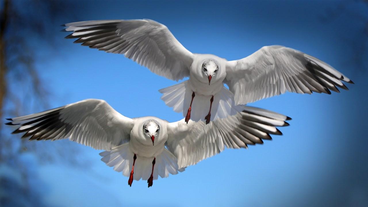 Latest Hd Wallpapers Free Download Smileandspeak Sea Birds Wallpaper Hd 1280x720 Wallpaper Teahub Io