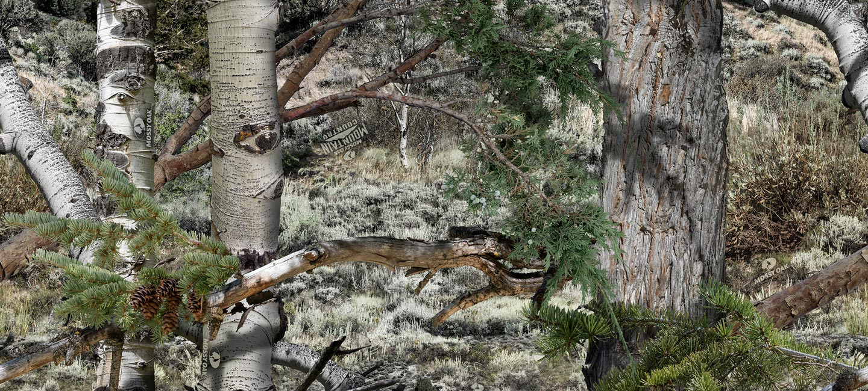 Mossy Oak Mountain Country - HD Wallpaper