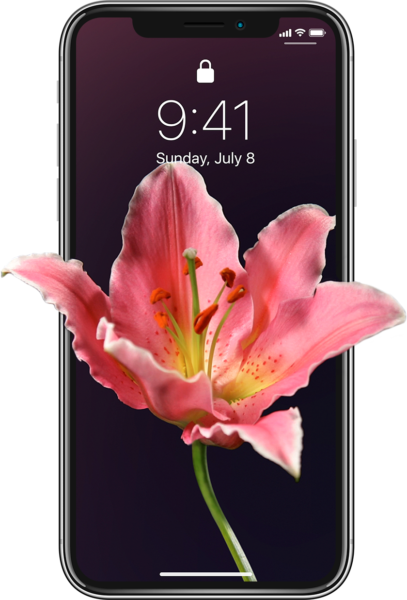 Iphone 11 Pro Max Wallpaper Flowers - HD Wallpaper
