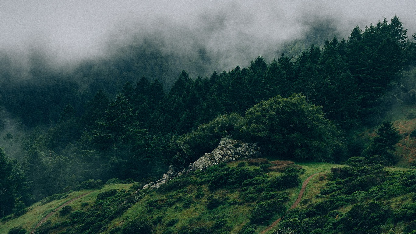 Nature Green Aesthetic Background - HD Wallpaper