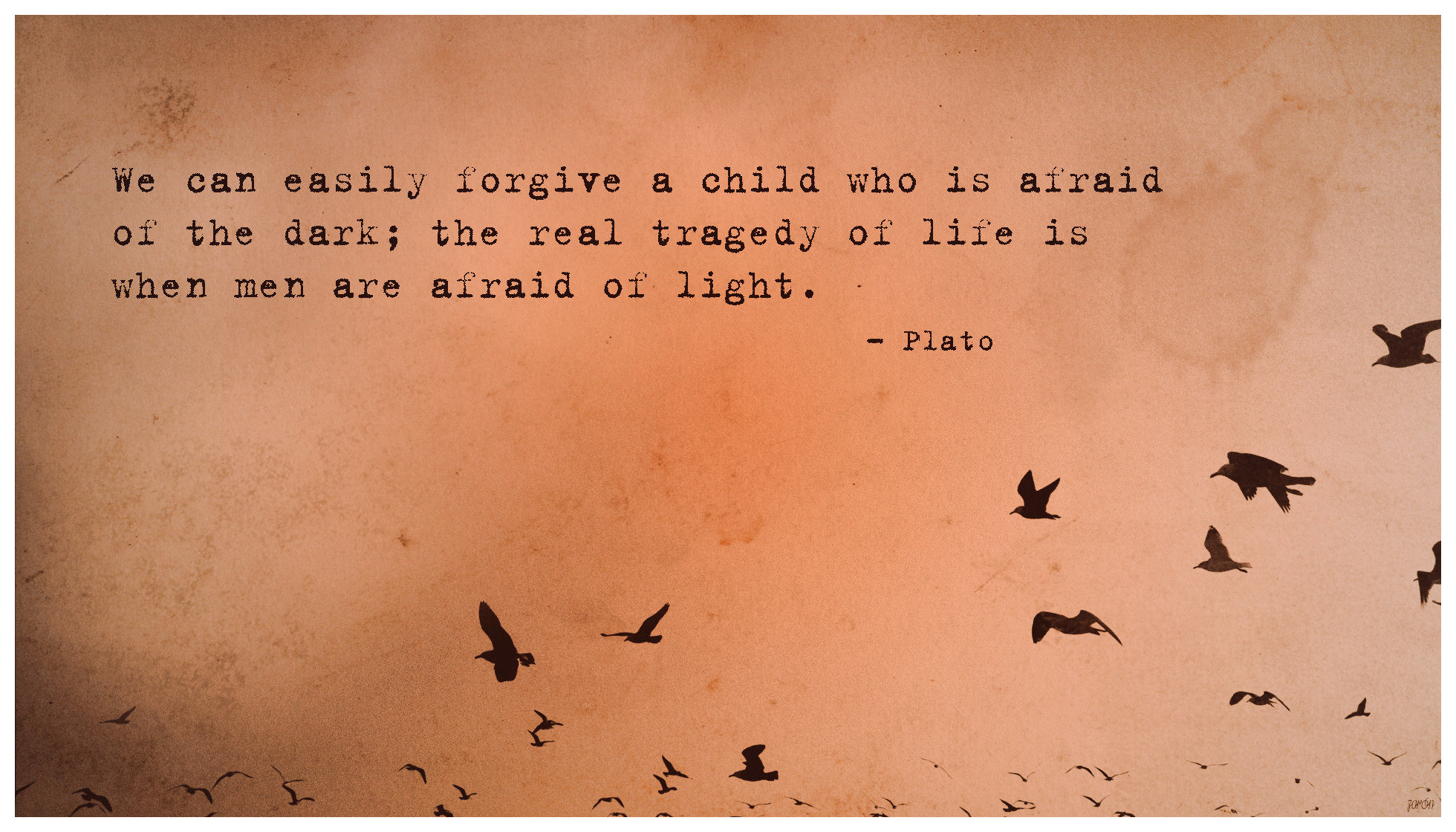 Plato Quote Tragedy Of Life Toaster Hd Wallpaper - Nine Inch Nails Birds - HD Wallpaper