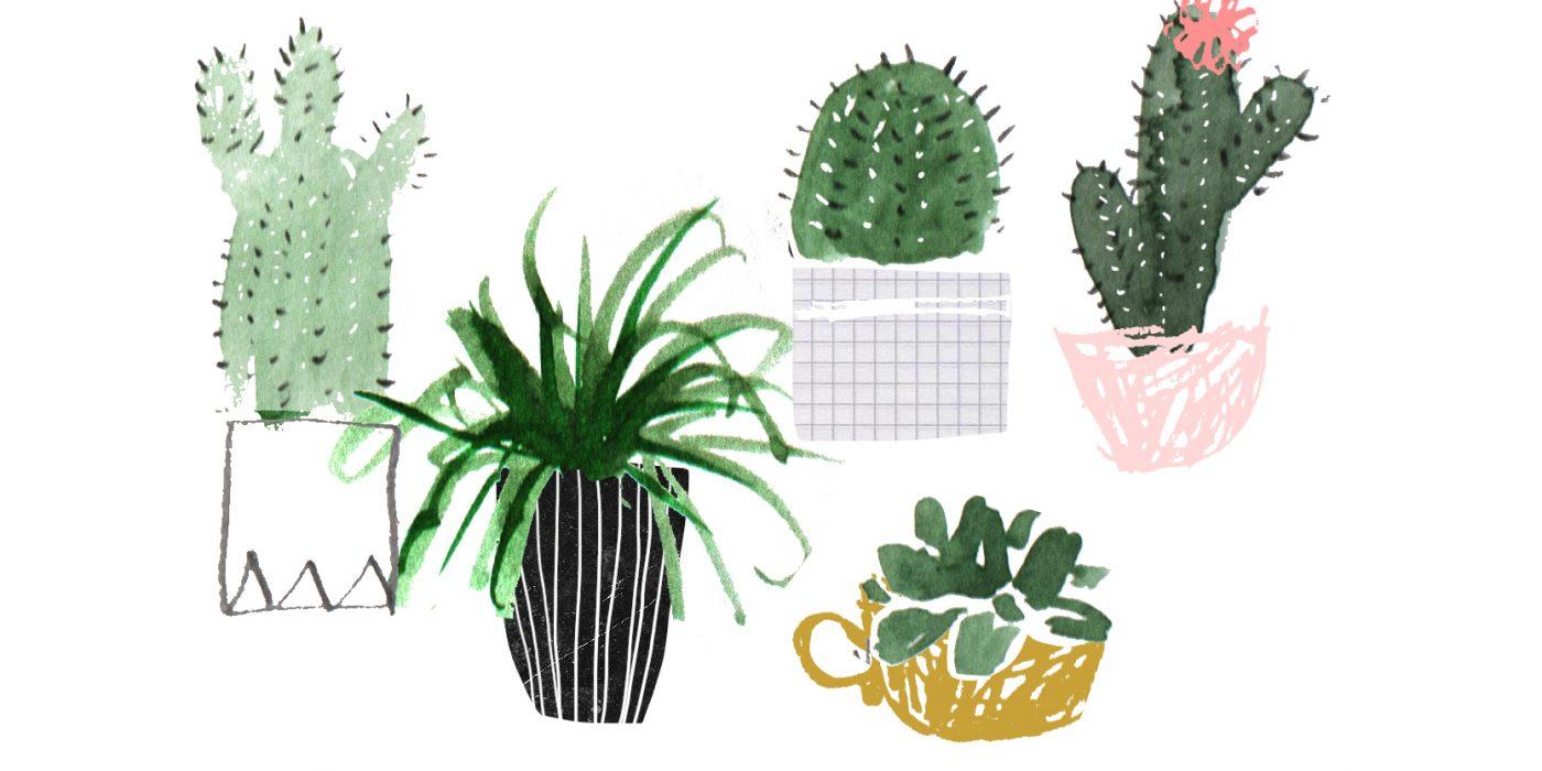 Plant Family Aesthetic Desktop Wallpaper Succulents 1400x700 Wallpaper Teahub Io