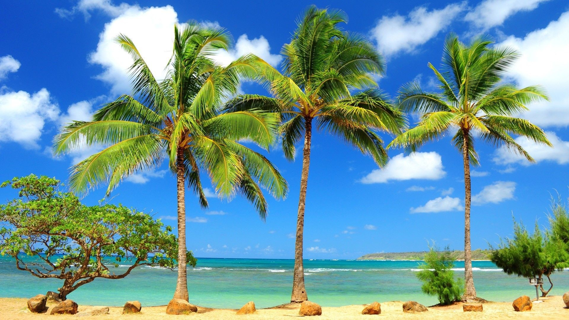 Tropical Hd Wallpapers Group   Data-src - High Resolution Palm Tree Background - HD Wallpaper