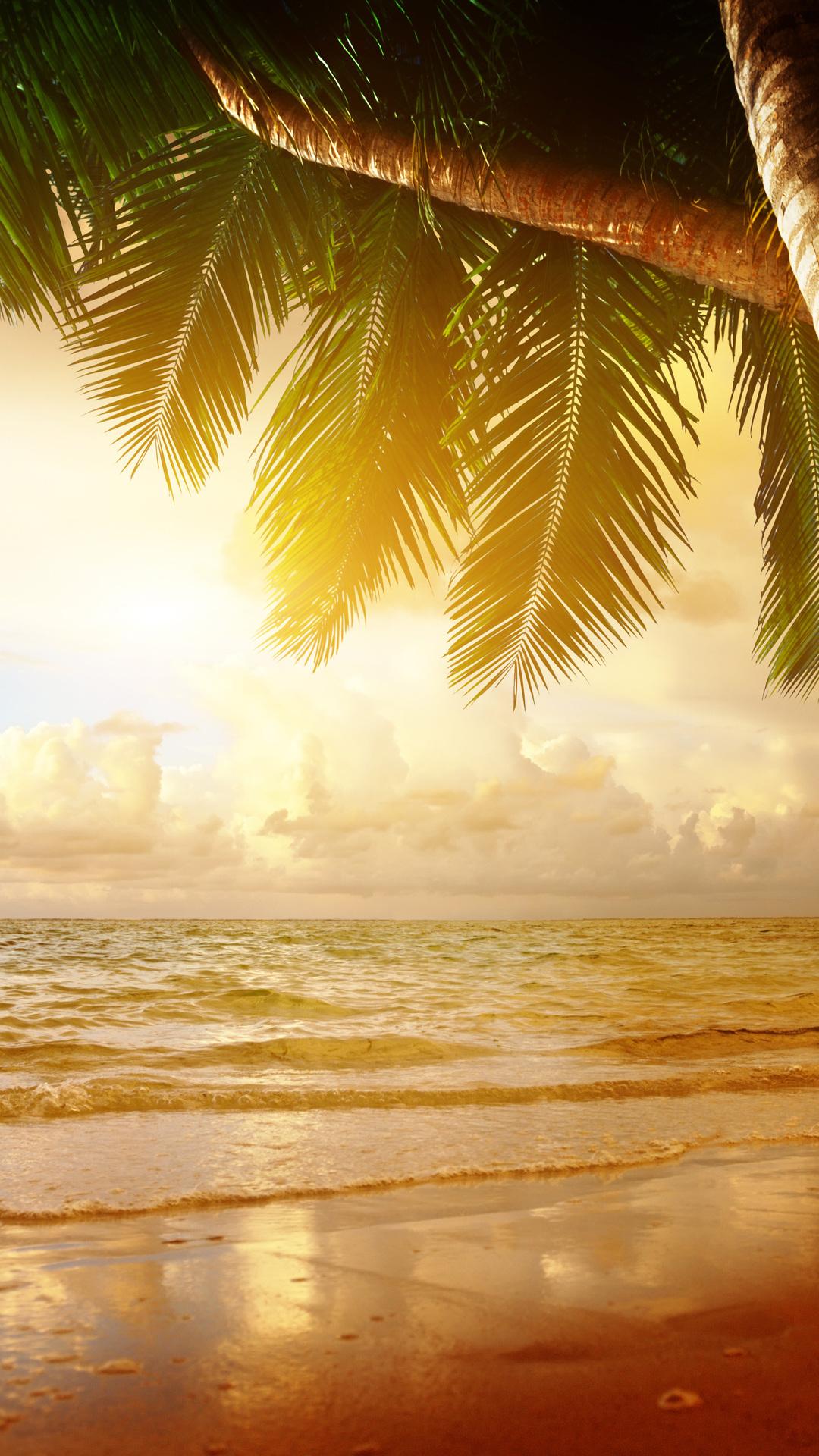 Sea, Palm, Ocean, Tropical, Sunset, Summer, Beach, - High Resolution Summer Desktop Backgrounds - HD Wallpaper