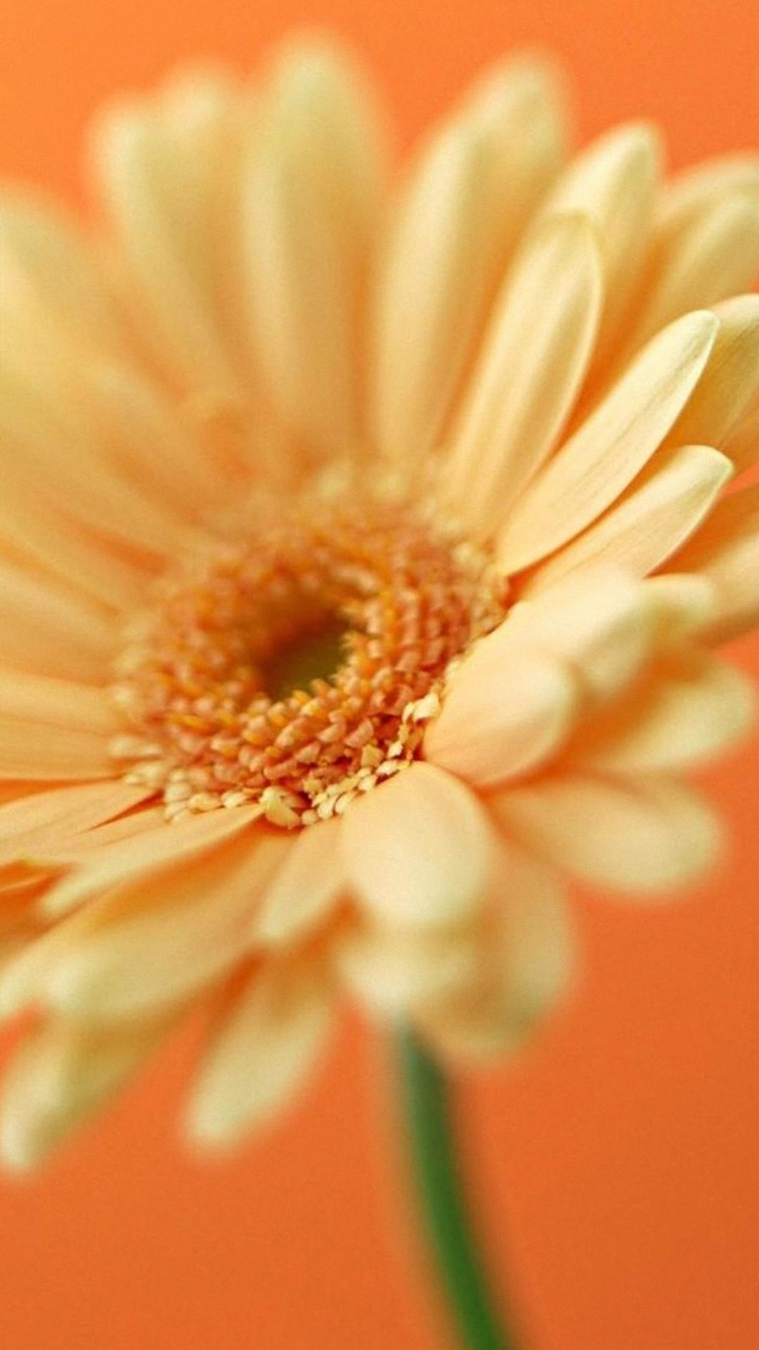Hd Flori Flower Samsung Galaxy S4 S5 Wallpapers Hd Wallpaper For Samsung Galaxy Flower 1080x1920 Wallpaper Teahub Io