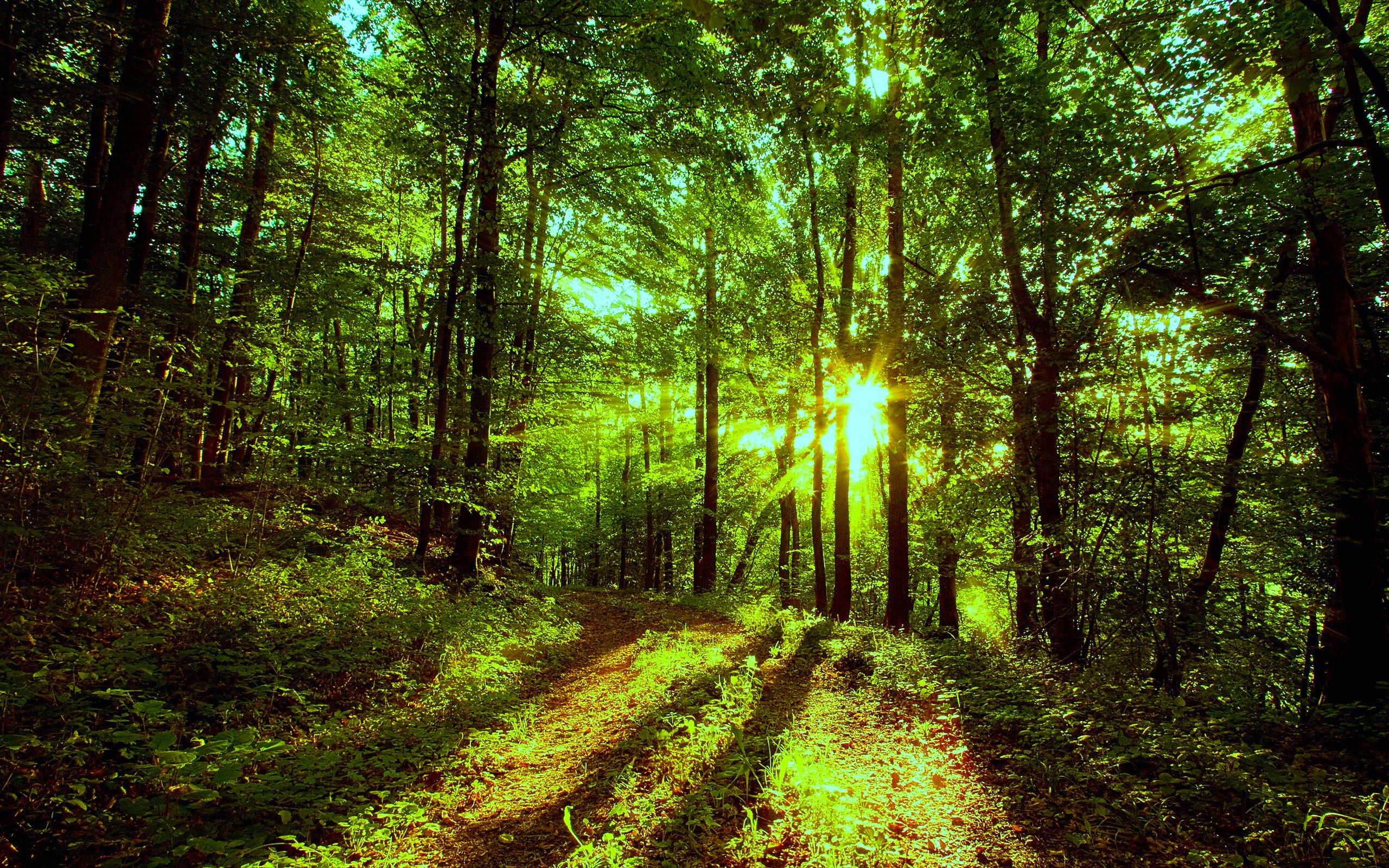 Nature Forest Wallpaper - HD Wallpaper