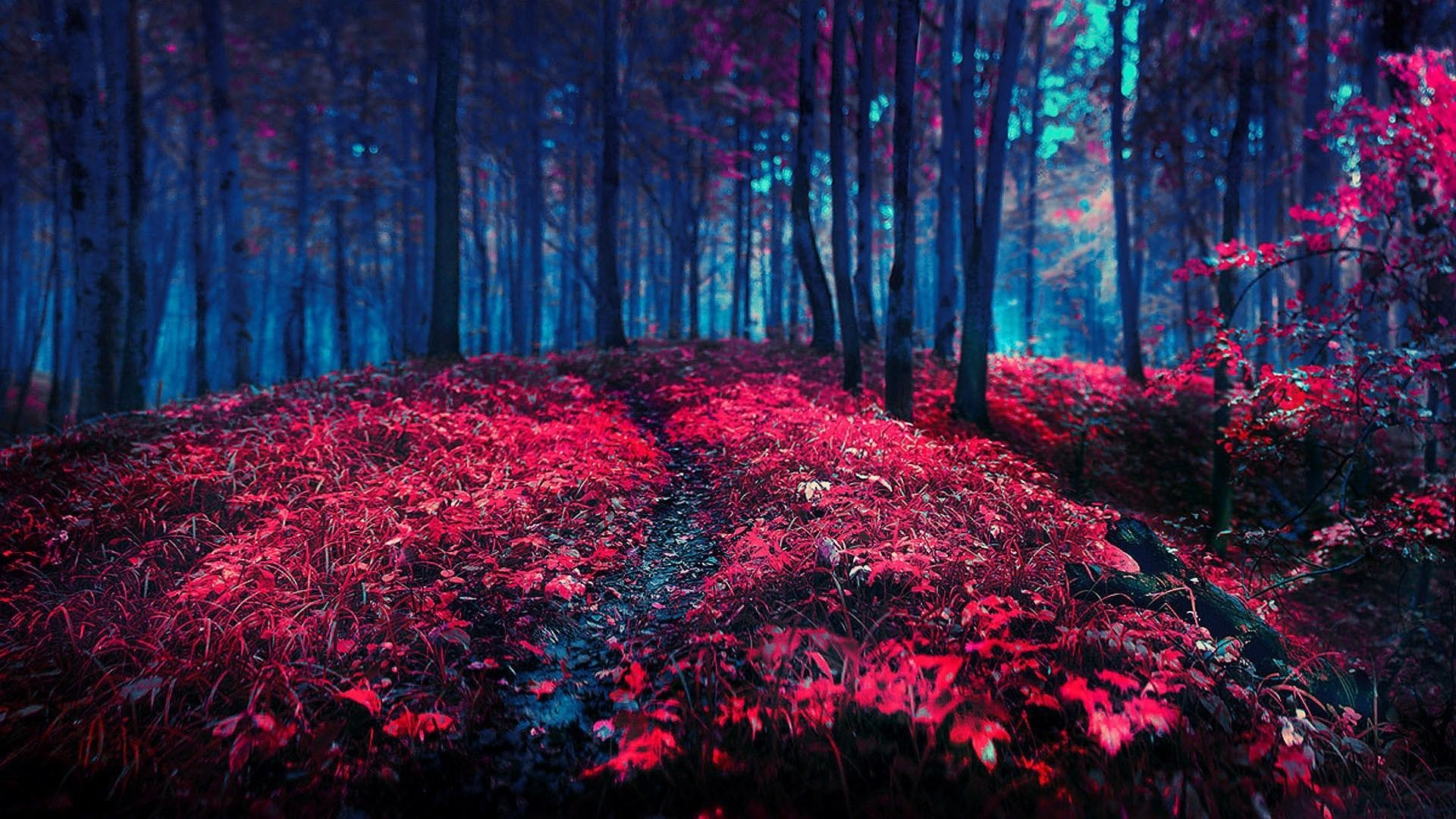 1920x1080, Red Nature Wallpaper   Data Id 367631   - Lovely Nature Images Hd - HD Wallpaper
