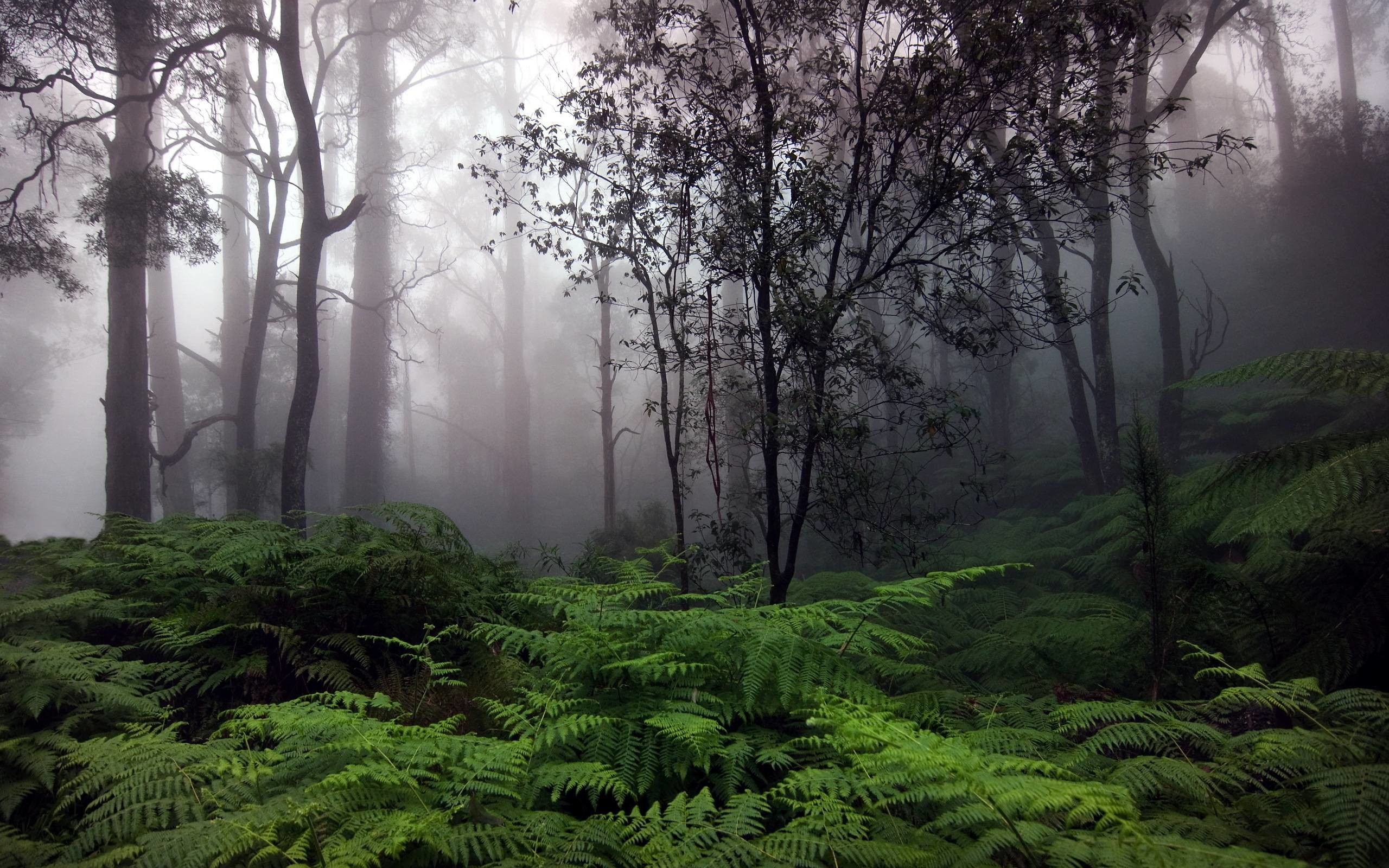 2560x1600, Rain Forest Wallpapers - Rainy Forest Background - HD Wallpaper