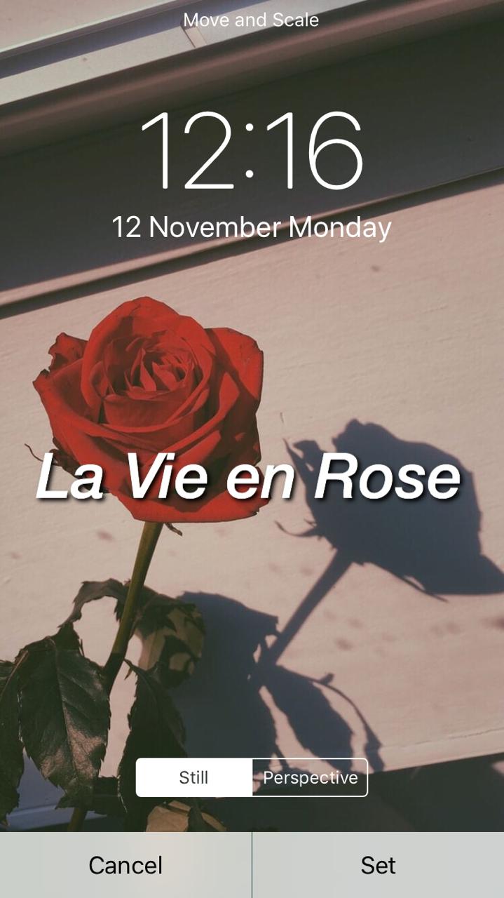 Image   Hintergrund Tumblr Bilder Rose   20x20 Wallpaper ...